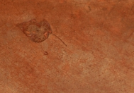 A leaf caught in the stained concrete floor.